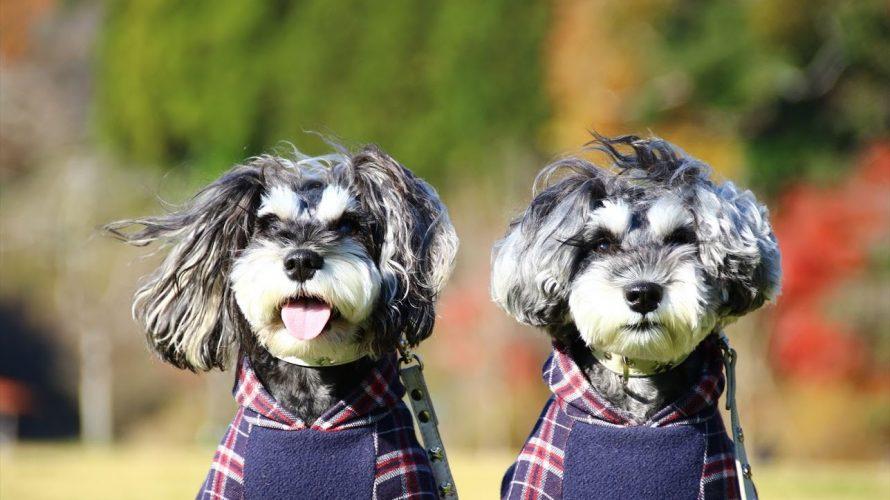 日頃の喧騒から離れ、花や犬とのふれあいによってやすらぎと活力を感じることのできる可能性のあるラブラドゥードルの里