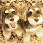 髭犬祭よりご長寿表彰開催のおしらせです!