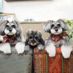 髭犬祭2018の髭犬マーケット第1弾の発表です!