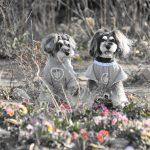 飼い主の責任で世話を—ペットの災害指針改訂