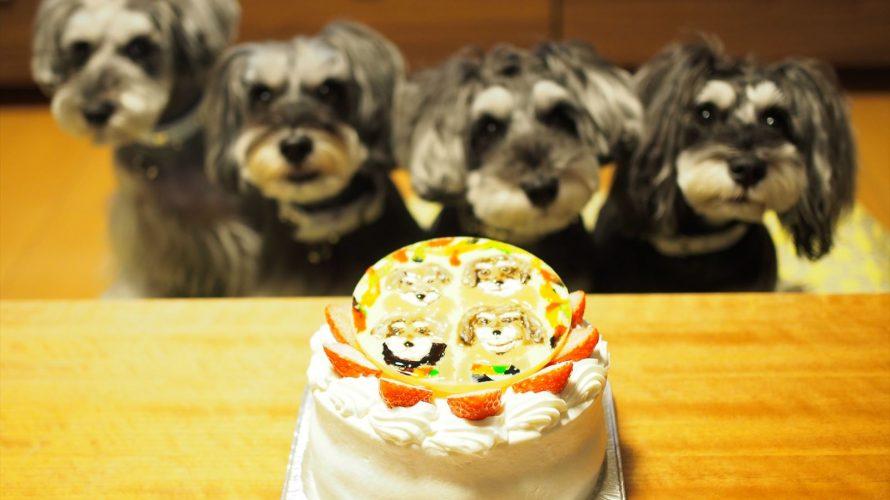 髭犬祭のSchnap Shot…何?