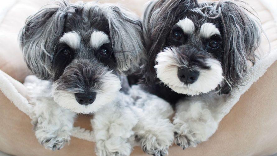 本日が髭犬祭ご優待チケットお申し込み最終日!そして、20時より髭犬祭のピクニックエリアの販売がスタート致します