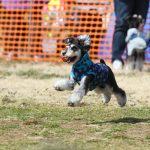 マーブル&イヴの髭犬祭2018