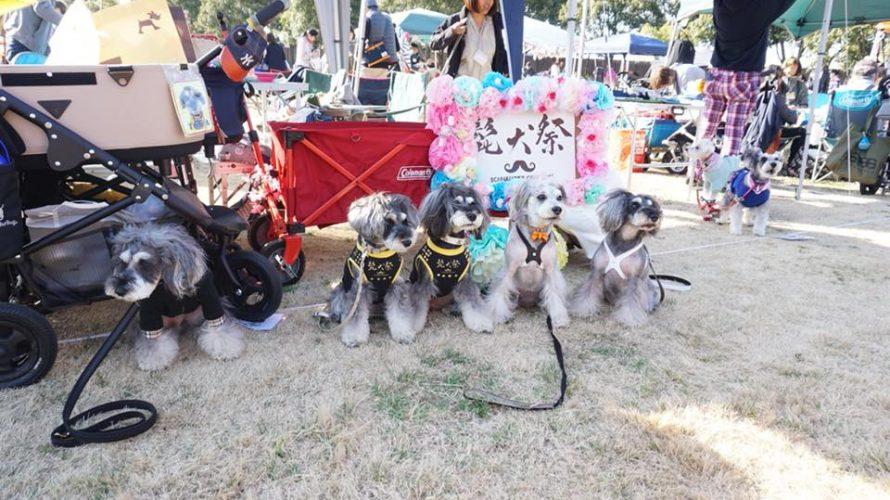 うれしい!お友達から頂いたマーブルとイヴの写真で綴る髭犬祭