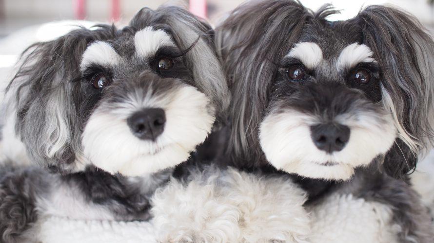 愛犬の食事選びの常識が変わる!マーブル&イヴの食の先生をご紹介致します☆彡