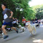 初参加…じゃなくて見学のドッグマラソンは、愛犬と一緒に距離という拘束の中で自由を共有するスポーツでした