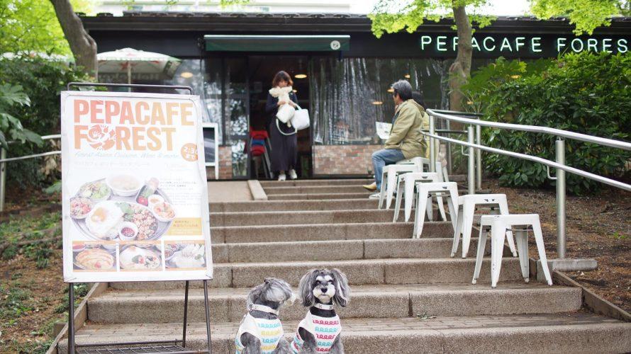 井の頭恩賜公園のペパカフェフォレストで新緑に囲まれてスパイシーなランチタイム