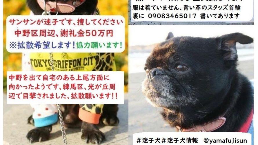 【中野・杉並・練馬・板橋・和光エリアで迷子情報】黒いパグに似たプチブラバンソンという犬種の男の子の迷子情報です