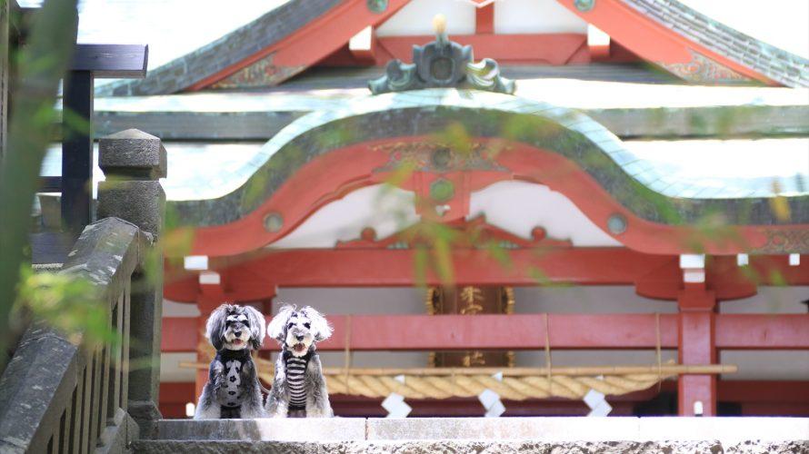 パワースポット見つけた!神様の息吹に包まれるお野菜料理レストランと来宮神社
