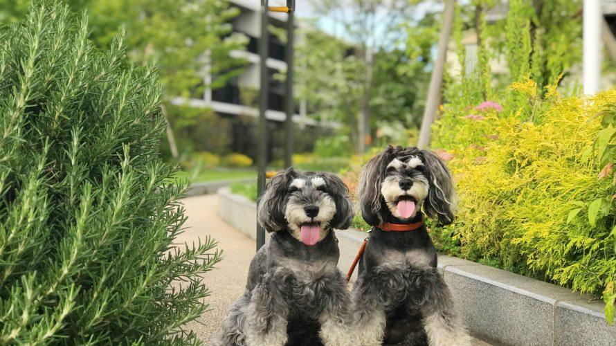 ご近所散歩!