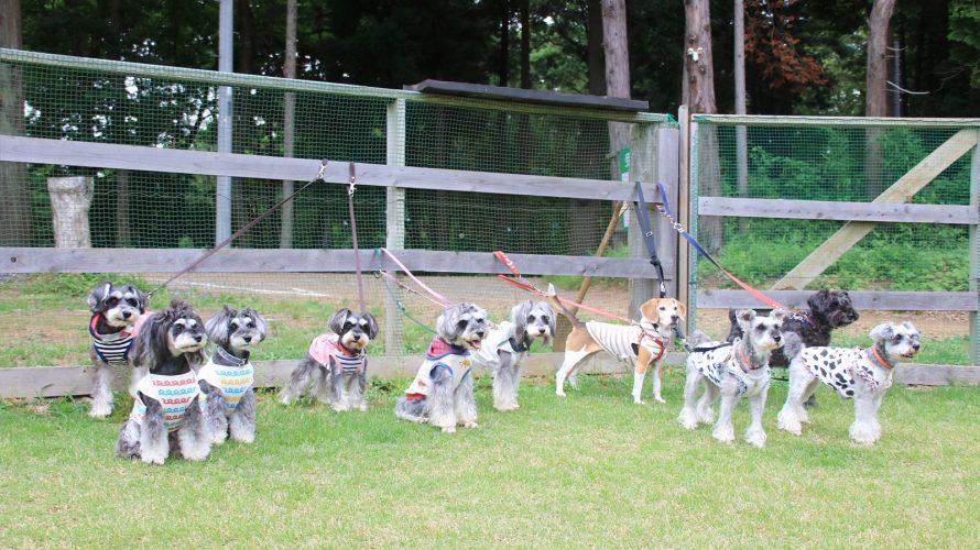 バーベキューが中止になっちゃって残念だったけど半年ぶりの『つくば犬たちの森ドッグラン』でいっぱい走りました!