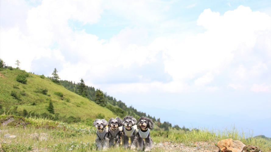 7月連休の信州ツアー最終章★旅行ガイドやまとめサイトでは教えてくれない愛犬と訪問できる楽しい施設やお店の情報をまとめてお知らせ致します!