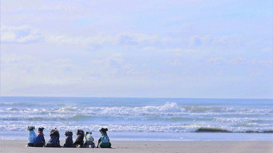 穏やかな九十九里の朝。本須賀海岸で楽しむ早朝撮影会!