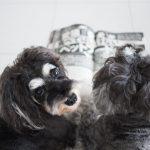 週刊新潮 愛犬が食べてはいけないペットフード…だけではない!?