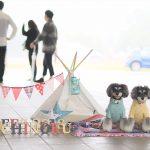 みちのく公園ドッグフェスティバル2018開催御礼