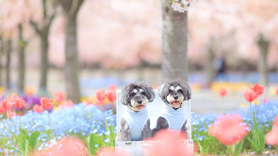 髭犬祭より前売りチケット&バスツアーのご注意点と2018ムービー公開🎶