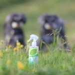 髭犬フレッシュナーズ!とうちの子自慢とピクニックエリアお申し込み受付開始日のおしらせです🎉
