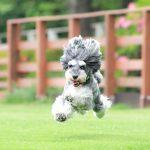 躍動感あふれる愛犬の写真ってどうやって撮るの?にマーブル&イヴ流で回答致します✨