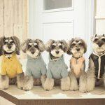 髭犬祭ではフォトジェニックになる!愛犬ポージングセミナーを開催します☆彡