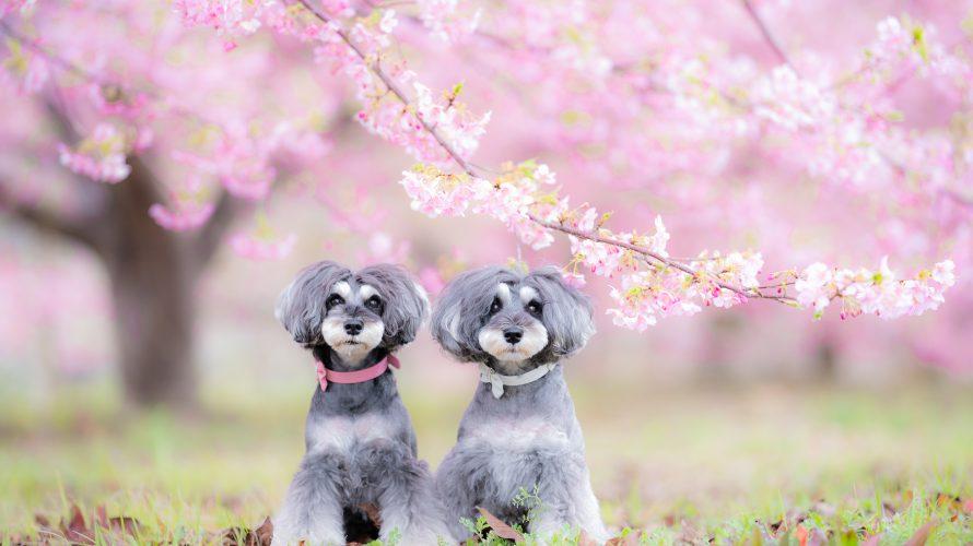 髭犬祭2020開催中止のお知らせ
