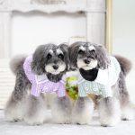 愛犬を守るためにチェックしておきたい、行政の新型コロナウィルス感染症(COVID-19)対策まとめ