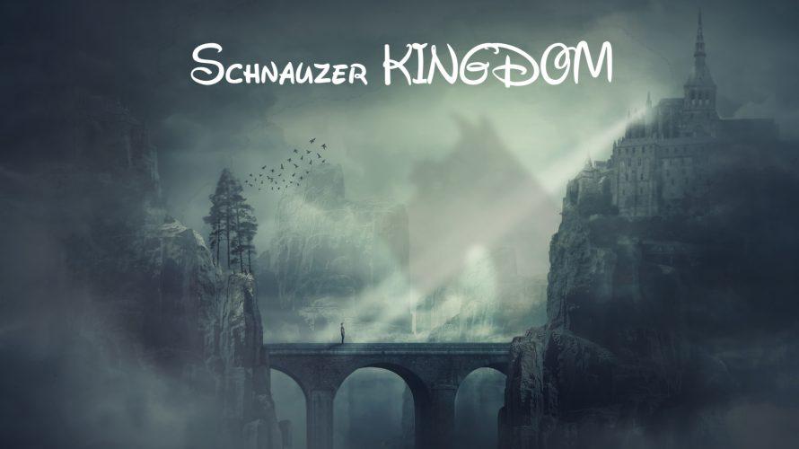 新しいシュナウザーイベント★Schnauzer KINGDOM始動致します👑
